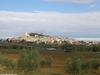 Sarteano - view from olive grove